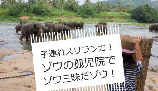 ピンナワラ・ゾウの孤児園&象乗り!個人旅行でスリランカへ!