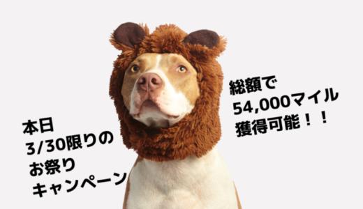 【本日3/30限定】総額66,700円相当のポイント付与。54,000マイル獲得可能!